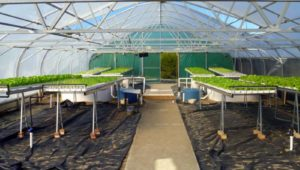 integrated aquaculture aquaponics