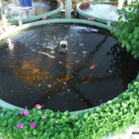 Water Flow At Basin View Integrated Garden