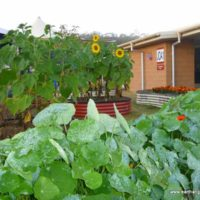Earthan Beds – Integrated Gardening At Its Best