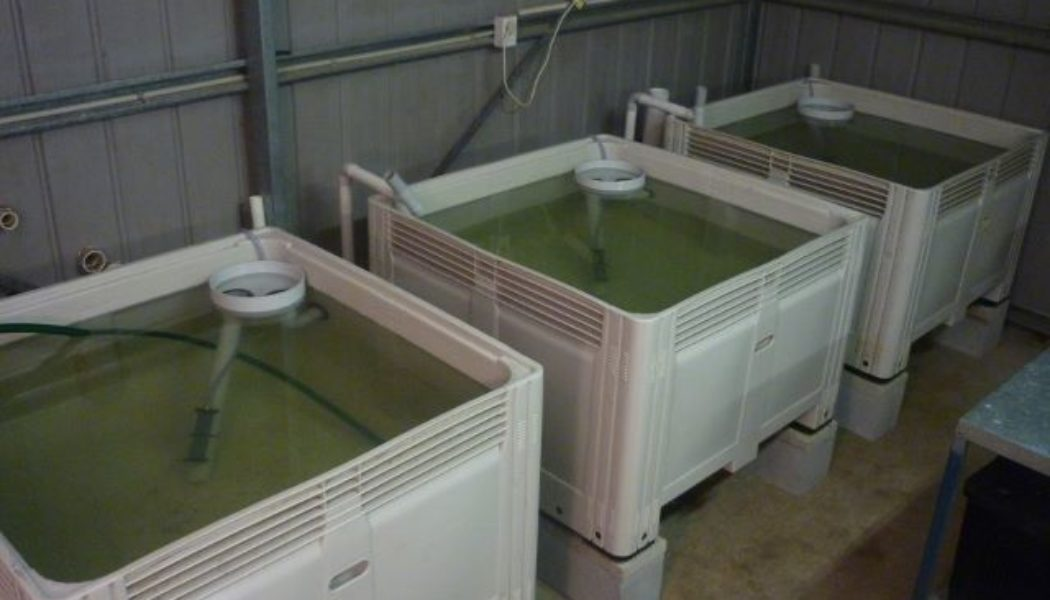 Air Lift Pump in Aquaponics and Aquaculture