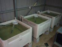 Air Lift Pump in Aquaponics and Aquaculture