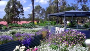 Aquaponics Garden – Official Opening