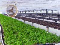 soil in aquaponics