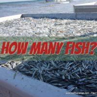how many fish aquaponic aquaculture
