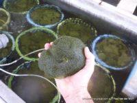 aquaculture aquaponic filtration