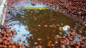solid wastes in aquaponics