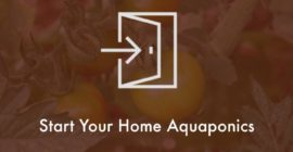 Start Your Home Aquaponic System