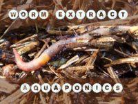 worms in aquaponics