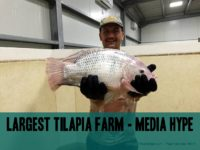 Largest Tilapia Farm in the world