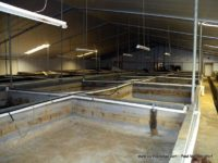 Economy of Scale – Commercial Aquaponics