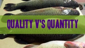 Quality of Your Fish Counts