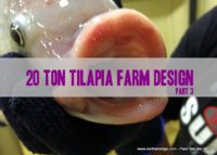 20 Ton Tilapia Farm – Part 3