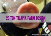 20 Ton Tilapia Farm – Part 3
