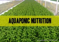 nutritional analysis of aquaponic produce