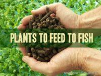 biomass calculations for aquaponics and aquaculture