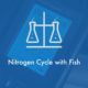 Nitrogen-cycle-fish