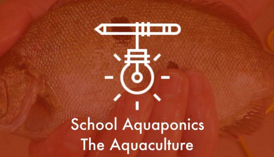 school-aquaponics